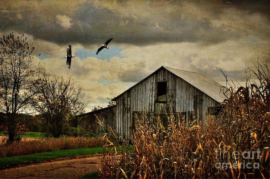 Barn Photograph - On The Wings Of Change by Lois Bryan