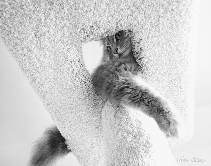 Cat Photograph - On Top by Sabine Stetson