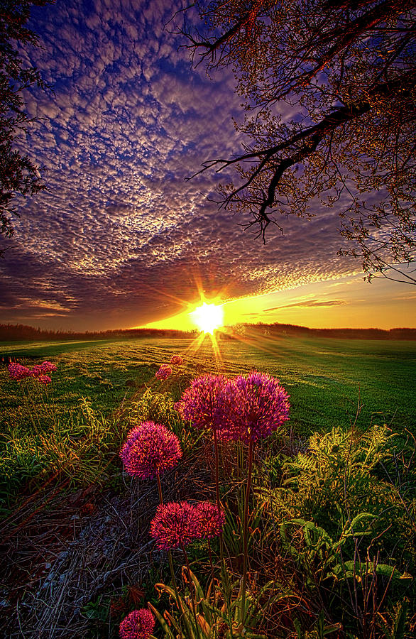 Once Upon A Lifetime Photograph By Phil Koch