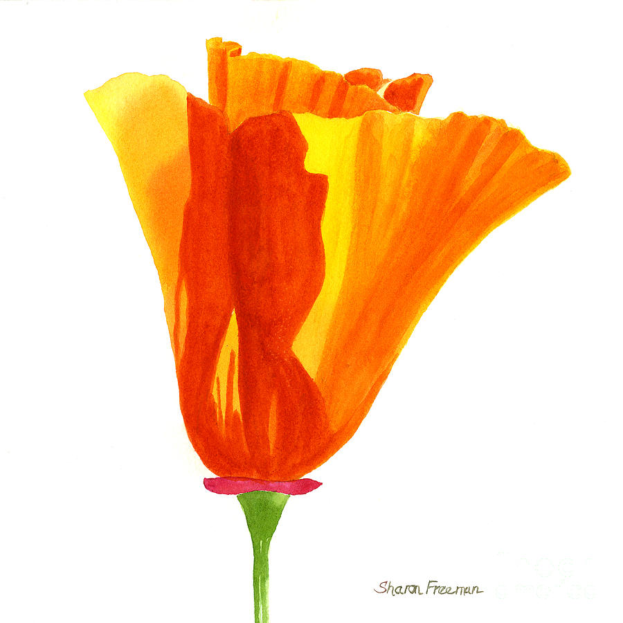 One california poppy flower painting by sharon freeman orange painting one california poppy flower by sharon freeman mightylinksfo
