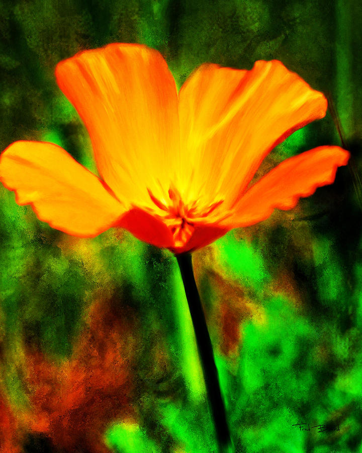 One California Poppy Painting by Fred Baird