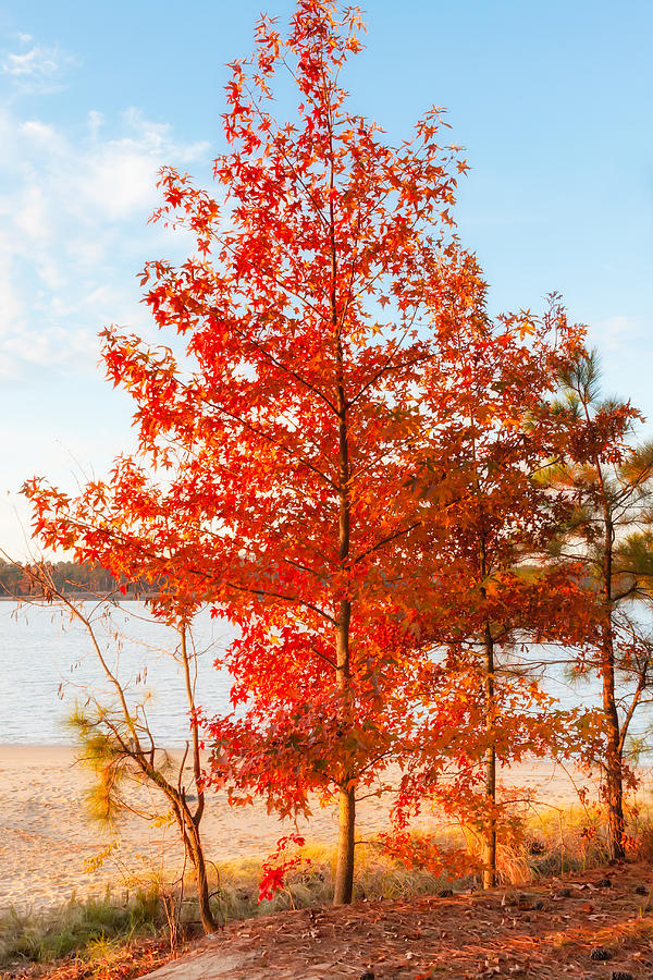 Autumn Photograph - One Fine Day by Lisa McStamp
