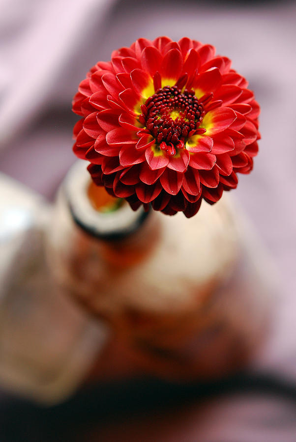 Red Flower Photograph - One Flower In Old Bottle by Laura Mountainspring