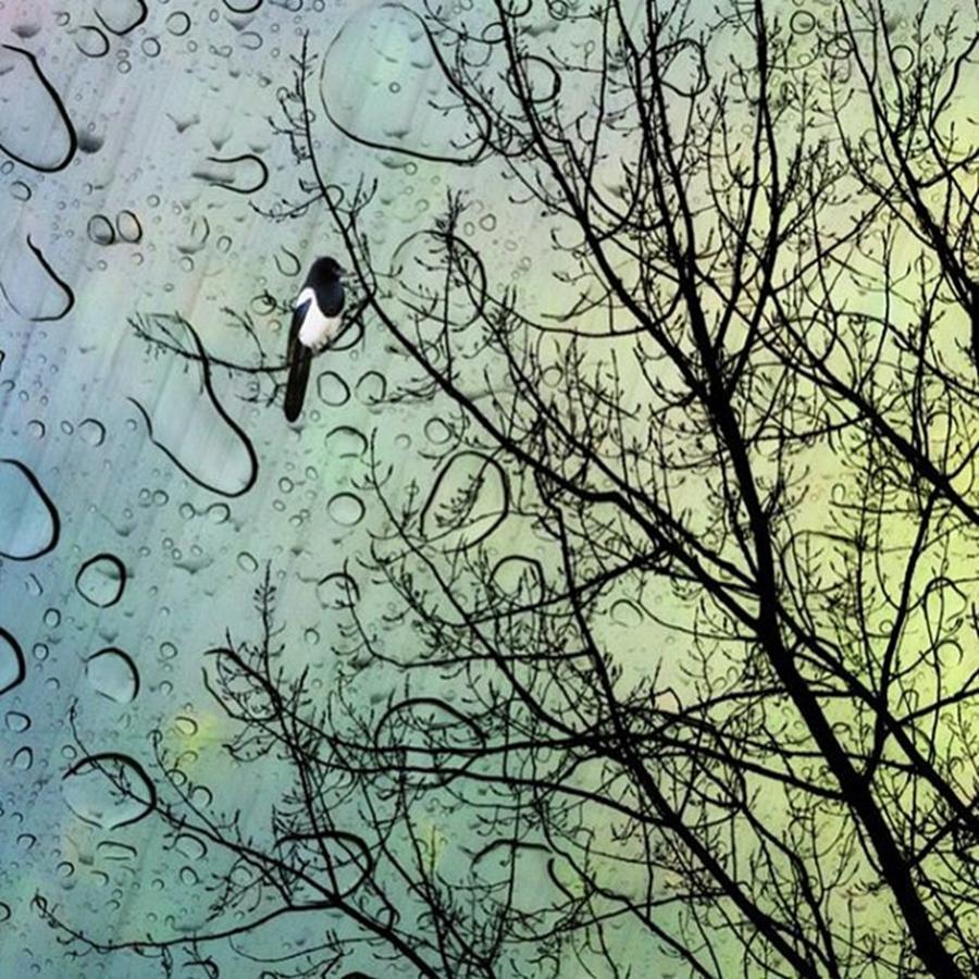 Illustration Photograph - One For Sorrow #nurseryrhyme by John Edwards