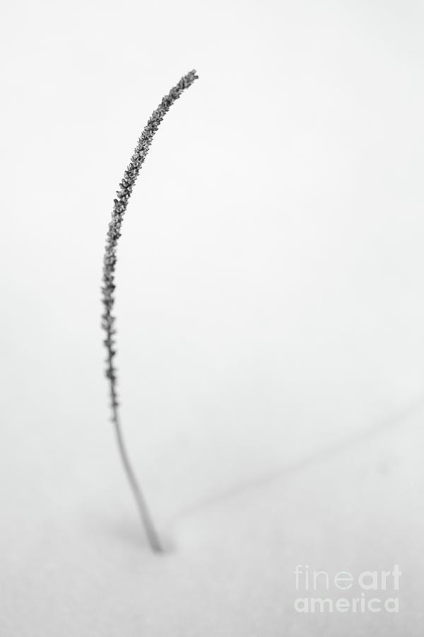 Dry Photograph - One by Gabriela Insuratelu