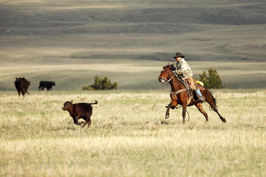 Calf Photograph - One Got Away by Todd Klassy