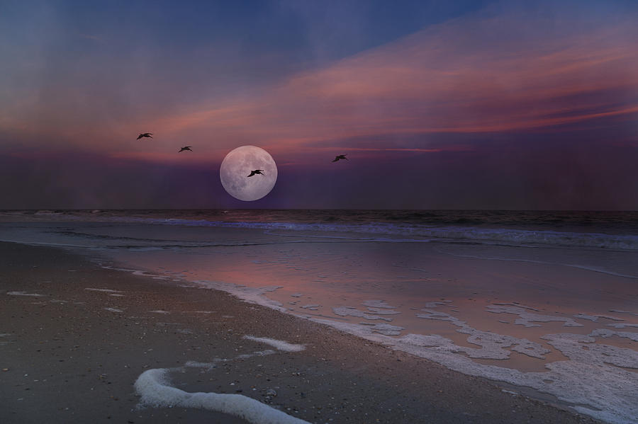 Topsail Photograph - One In A Million  by Betsy Knapp