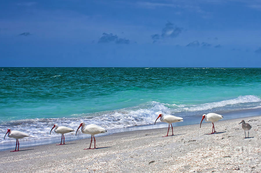 Captiva Photograph - One Is Different Then The Others by Richard Gripp