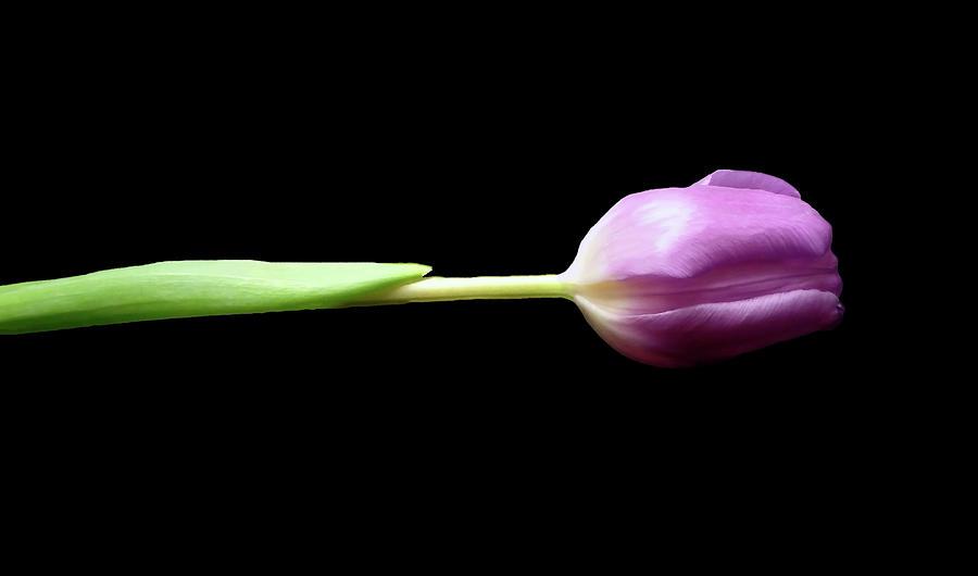 Flower Photograph - One by Johanna Hurmerinta