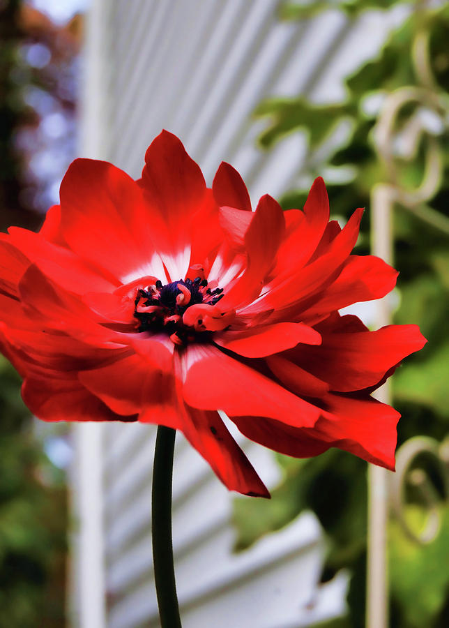 Red Photograph - One Last Flower by JAMART Photography