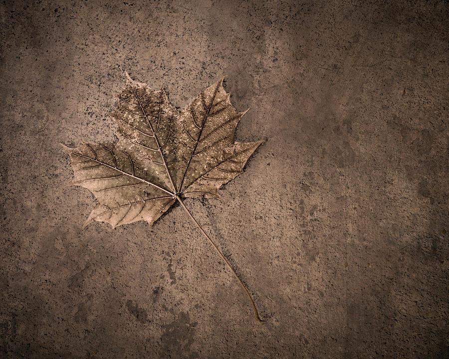 Leaf Photograph - One Leaf December 1st  by Scott Norris