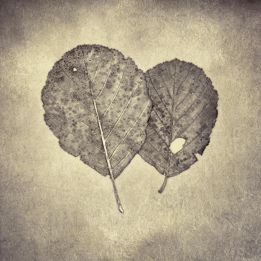 One Leaf Two Leaf Photograph