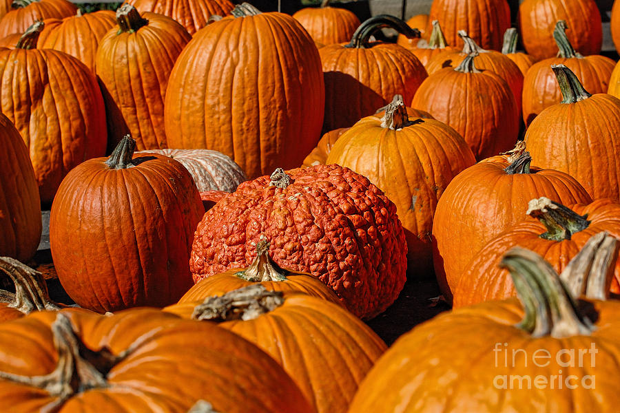 Pumpkin Photograph - One Of A Kind by Edward Sobuta