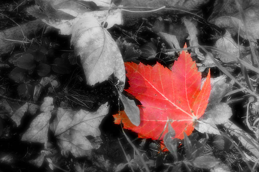 Leaf Photograph - One Of A Kind by Kenneth Krolikowski