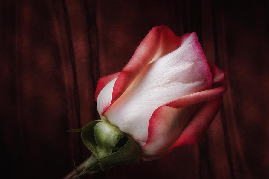 Beauty Photograph - One Red Rose Still Life by Tom Mc Nemar