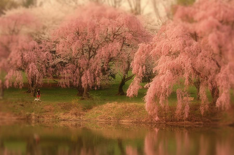 One Spring Day - Holmdel Park Photograph