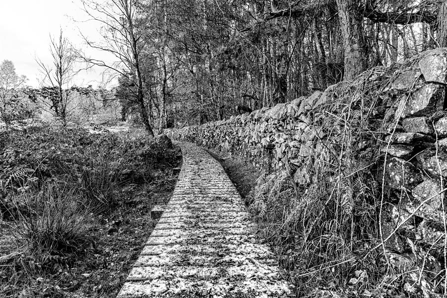 Path Photograph - One To Follow by Nick Bywater