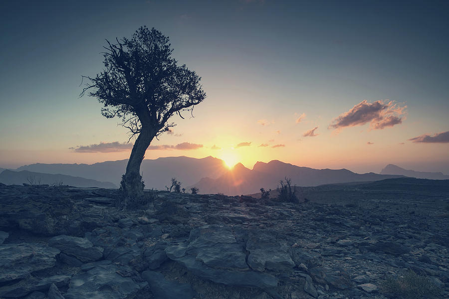 Oman Photograph - One Tree And Sunset by Franz Sussbauer