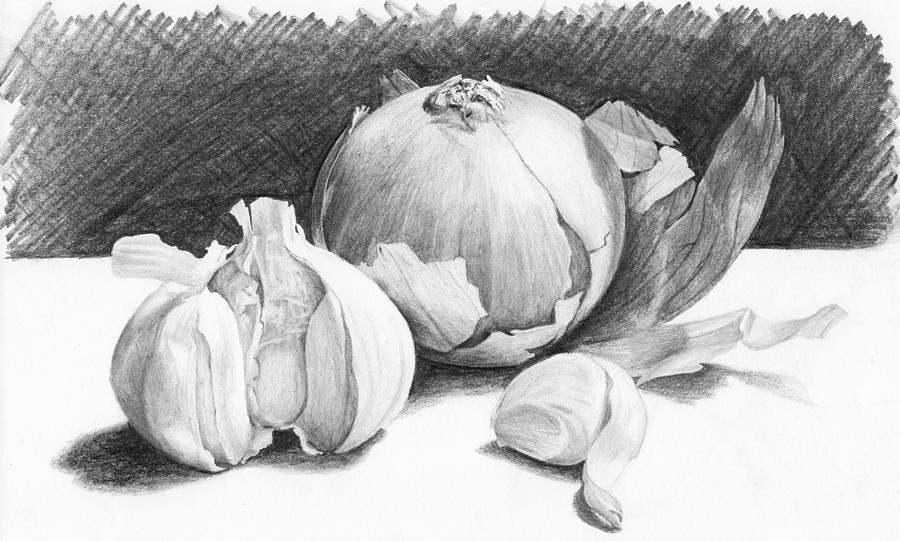 Pencil Drawing - Onion And Garlic Still Life by Nolan Clark