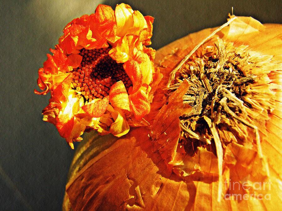 Onion Photograph - Onion And His Daisy by Sarah Loft