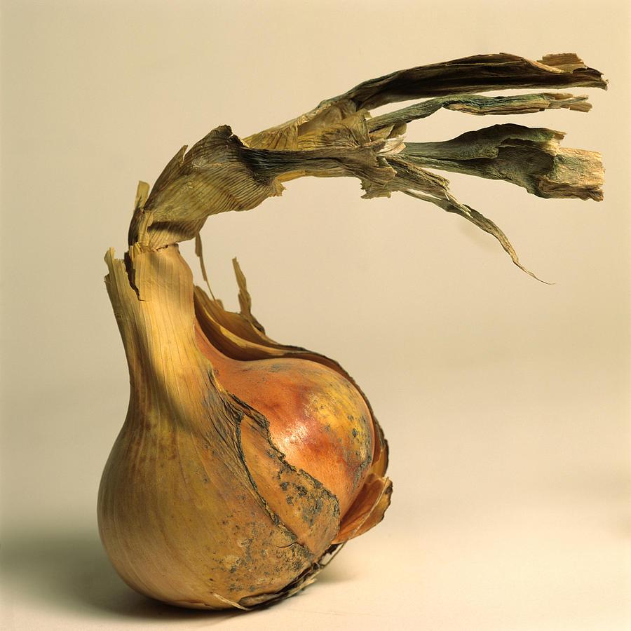 Whole Photograph - Onion by Bernard Jaubert