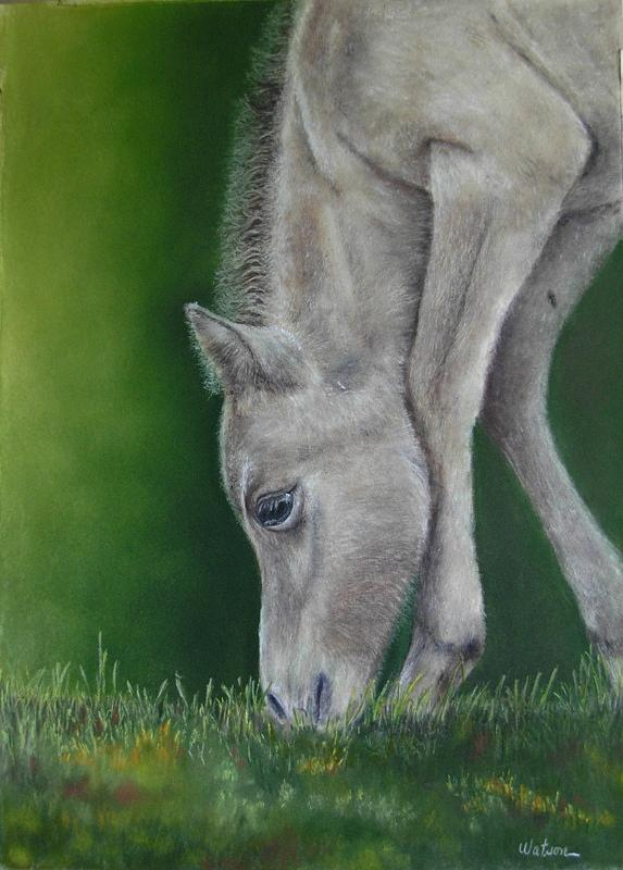 Horse Painting - Only 3 Days Old by Ceci Watson