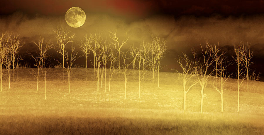 Landscapes Photograph - Only at Night by Holly Kempe
