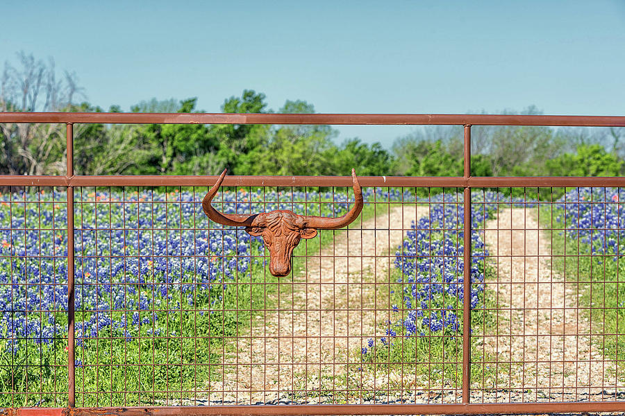 Only in Texas by Victor Culpepper