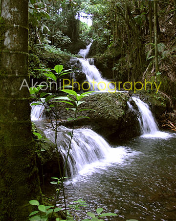 Hilo Photograph - Onomea Falls by Anthony Valadon