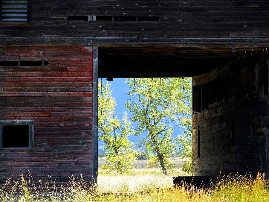 Barn Photograph - Open Door by Mick Sullivan