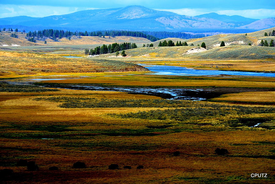 Yellowstone National Park Photograph - Open Range by Carrie Putz