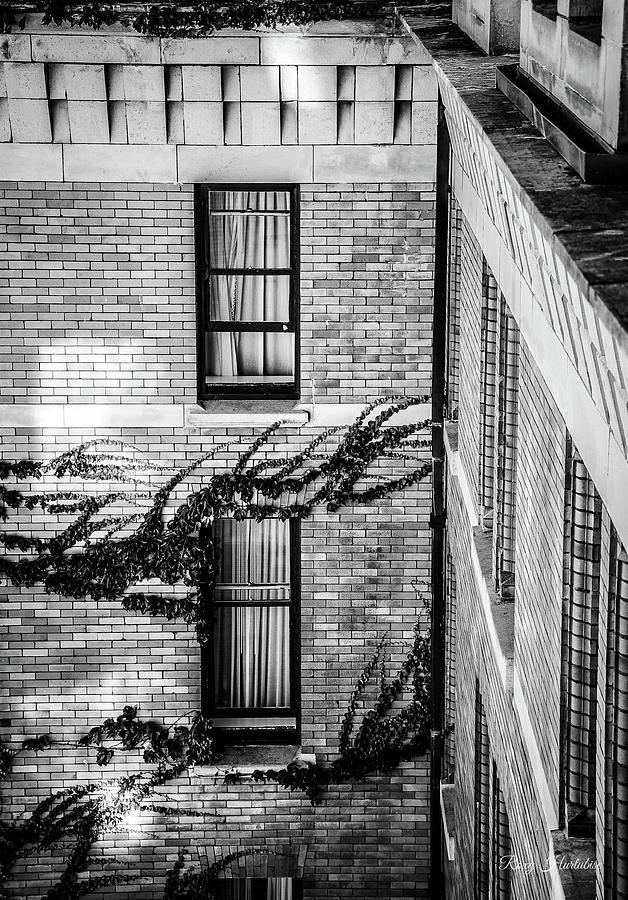 Open Window by Roxy Hurtubise