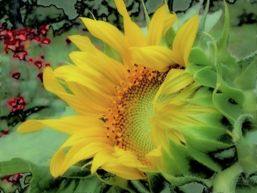 Opening Day - Sunflower - Brush Strokes by MTBobbins Photography