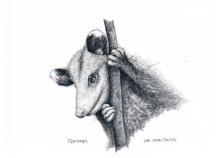 Opposum Drawing - Virginia Opposum by Lee Pantas