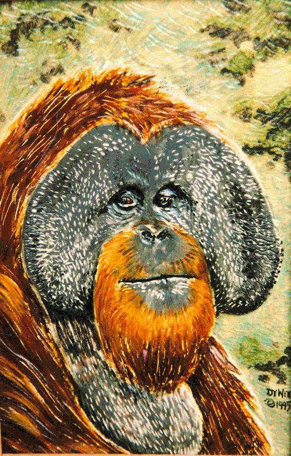 Orangutan Relief - Orang Utan by Dy Witt