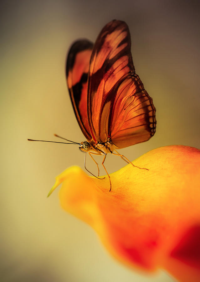 Butterfly Photograph - Orange And Black Butterfly Sitting On The Yellow Petal by Jaroslaw Blaminsky
