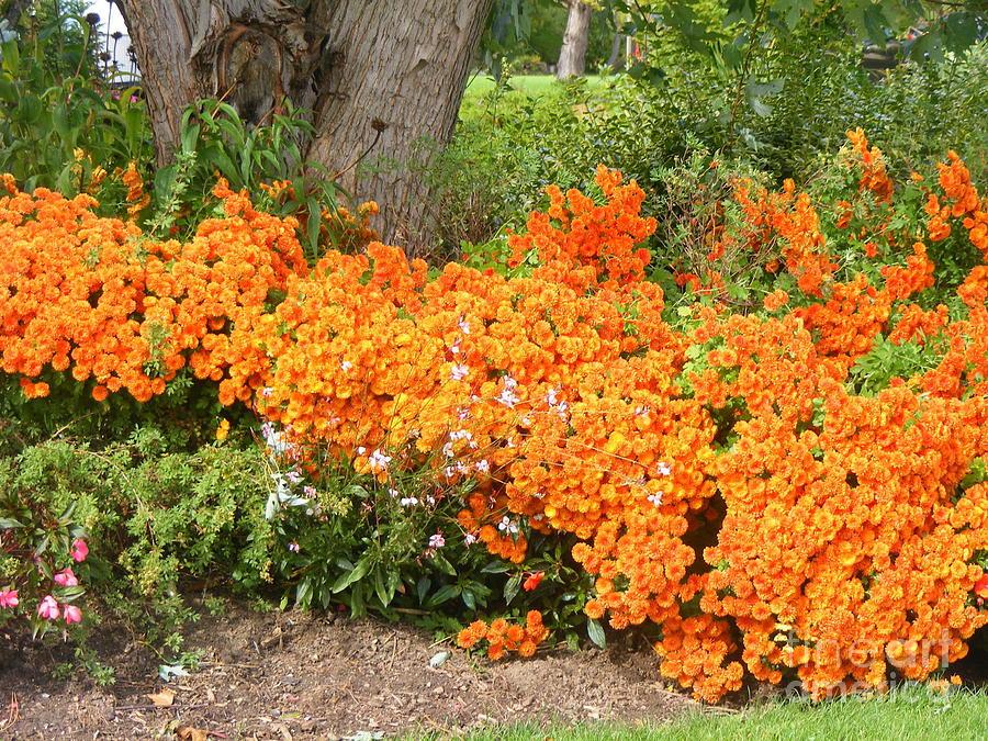 Flowers Photograph - Orange Beauty by Deborah Selib-Haig DMacq