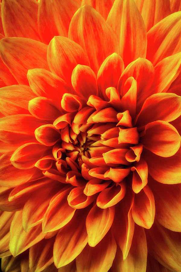 Color Photograph - Orange Beauty by Garry Gay