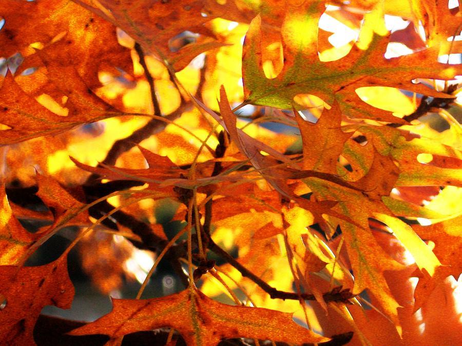 Orange Photograph - Orange by Brad Scoggins