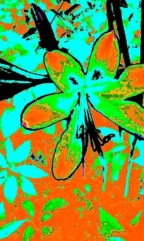 Orange Burst Flower Photograph
