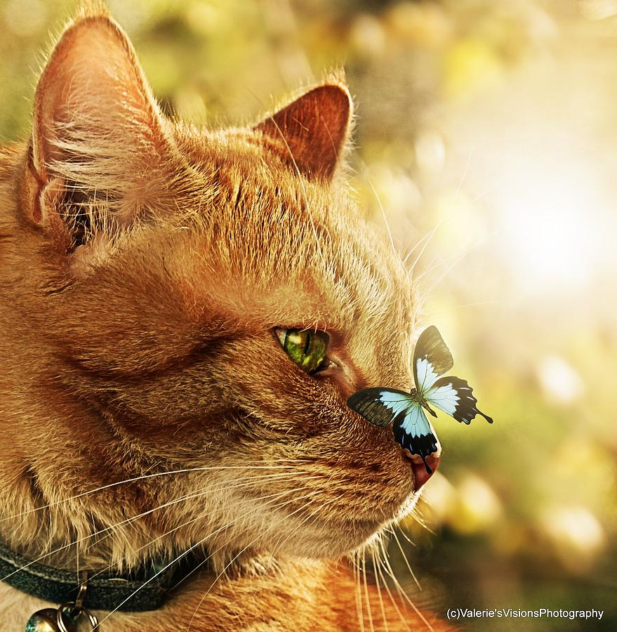 Orange Cat With Blue Butterfly On His Nose. Photograph by Valerie Stein