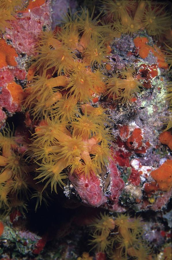 Animals Photograph - Orange Cup Coral And Sponges by Don Kreuter