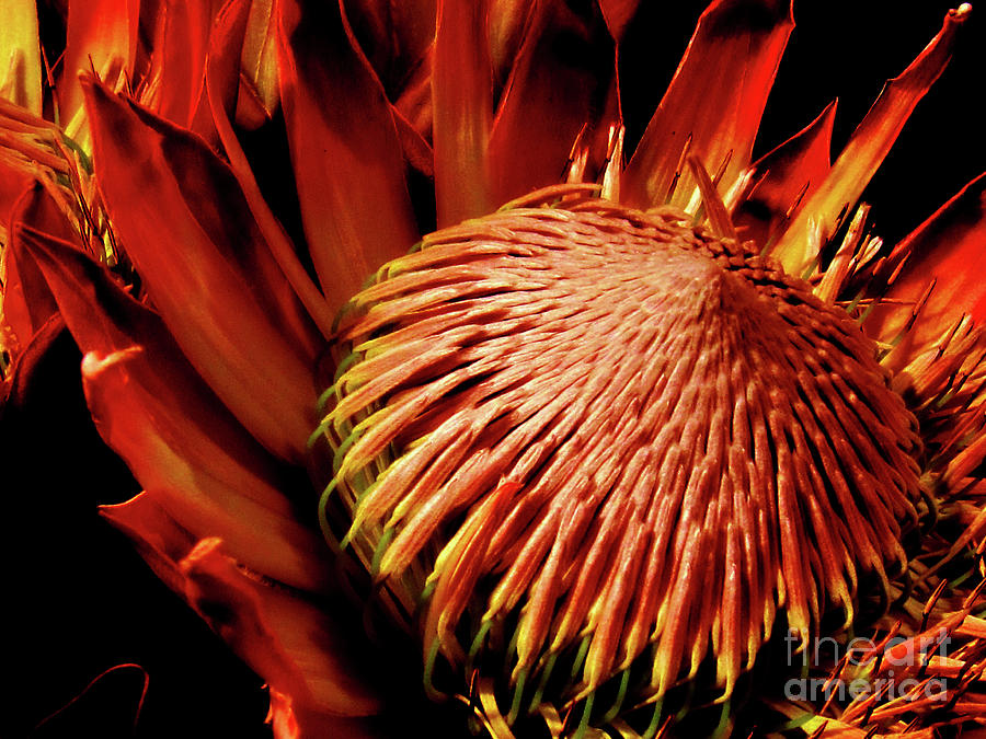Orange Flower Beauty Photograph