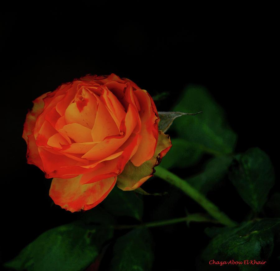 Flower Photograph - Orange Flower by Chaza Abou El Khair