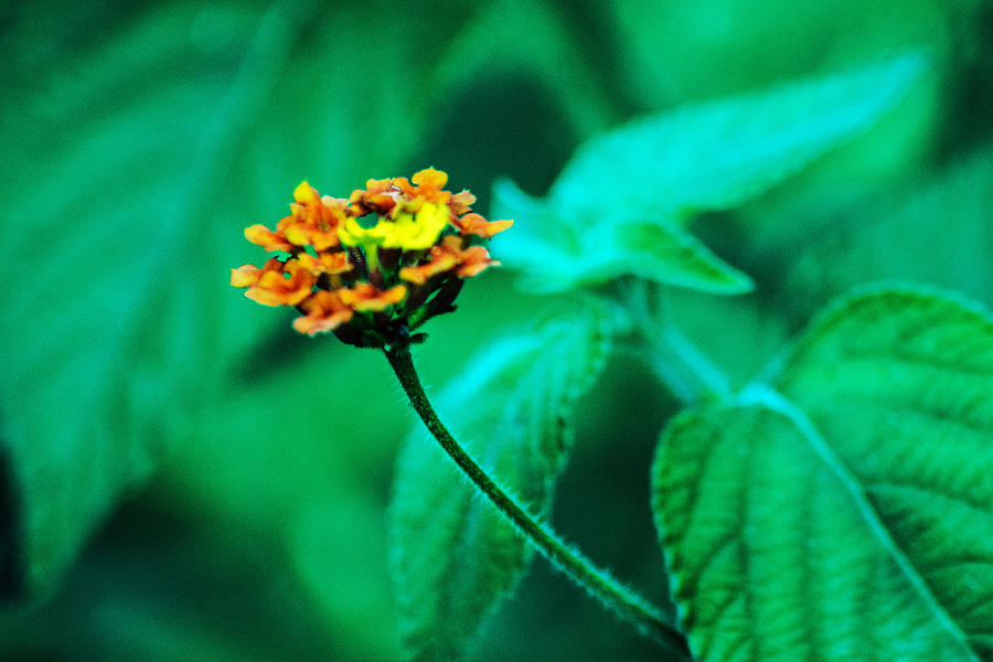 Flor Photograph - Orange Flower II by Totto Ponce