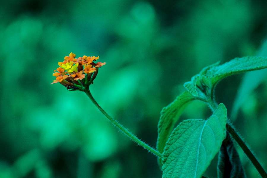 Flor Photograph - Orange Flower IIi by Totto Ponce