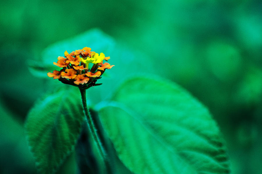 Flor Photograph - Orange Flower Iv by Totto Ponce