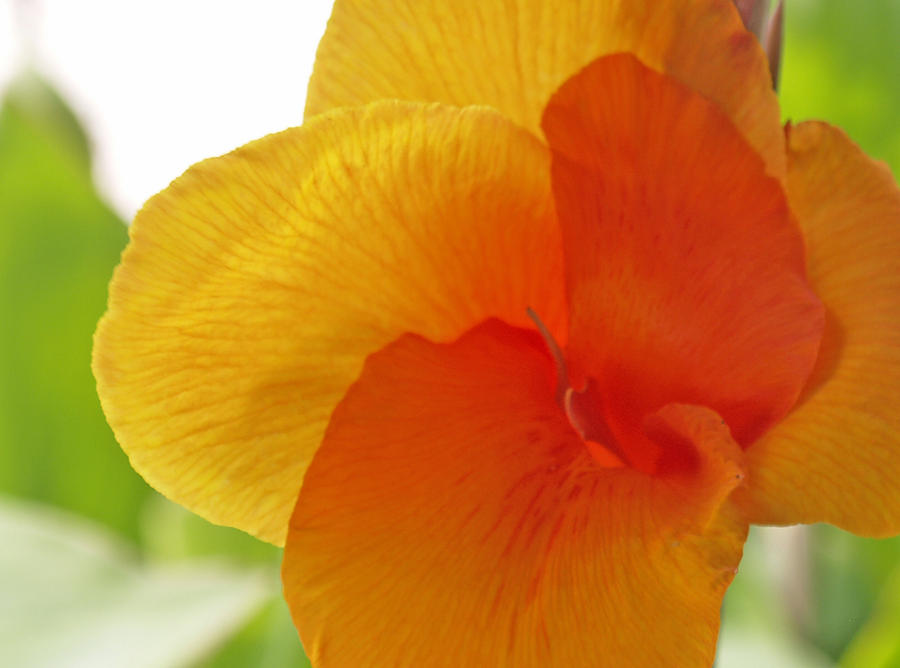 Floral Photograph - Orange Flower by James Granberry