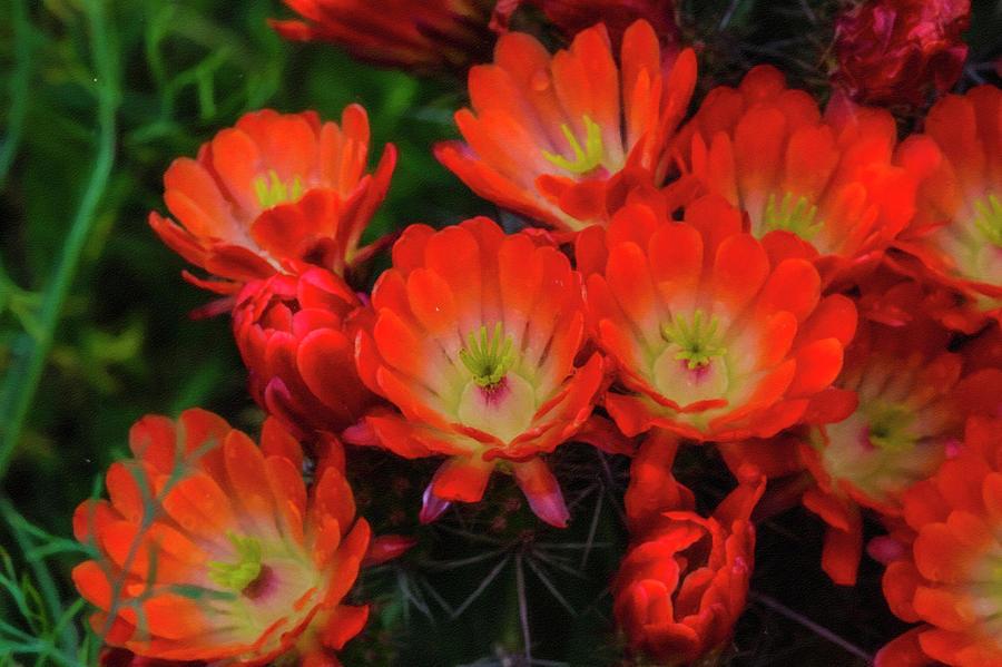 Orange Photograph - Orange flowers by Roy Nierdieck