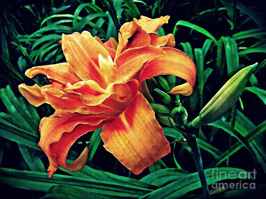 Lily Photograph - Orange Frenzy by Sarah Loft
